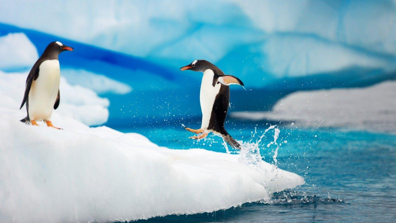Penguin Wallpapers Pack