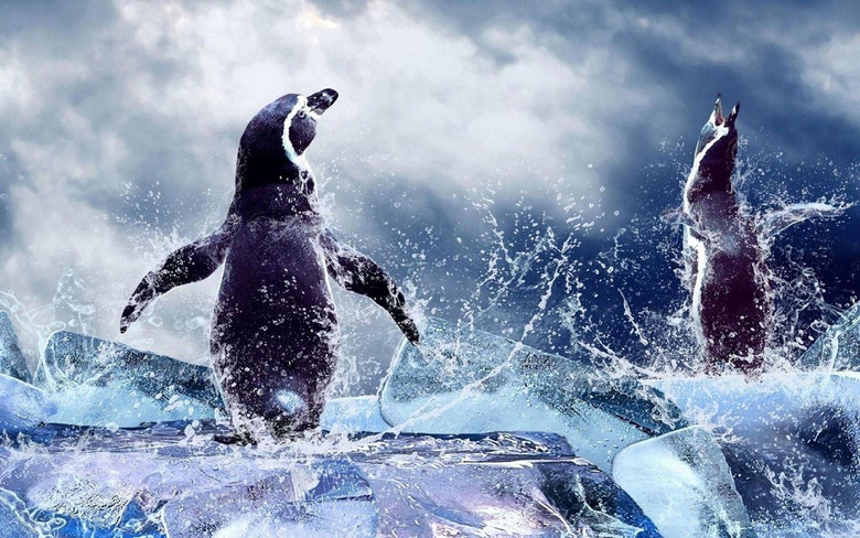 Penguin Live Wallpapers