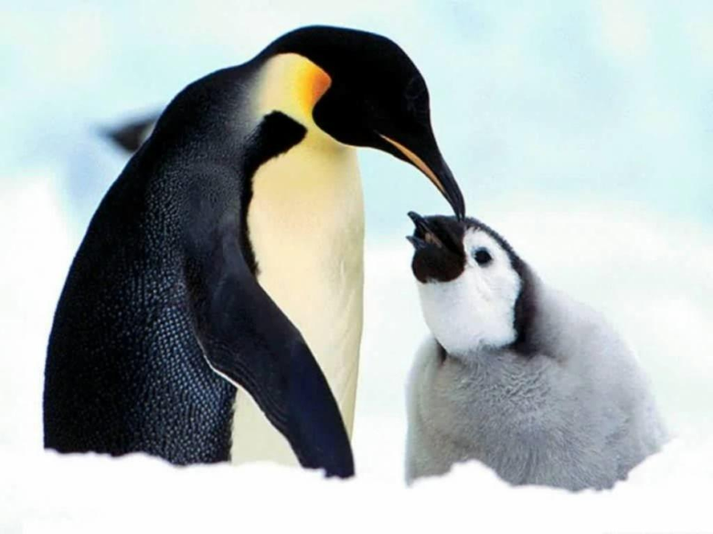 Penguin Wallpapers for Your Computer