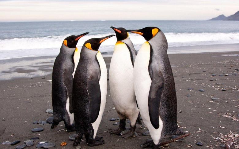 Penguin Wallpapers