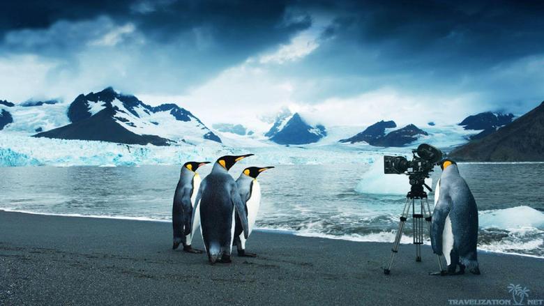 Google Panda Penguin Image Wallpapers for Desktop Webgranth