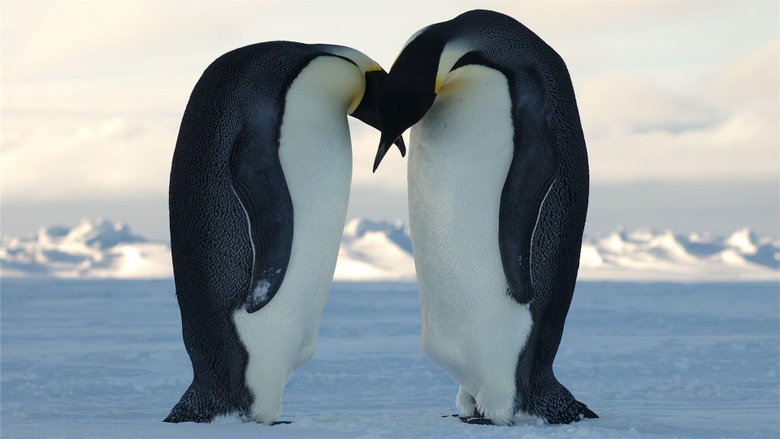 image about iPhone wallpapers Penguin iPhone 1200×797