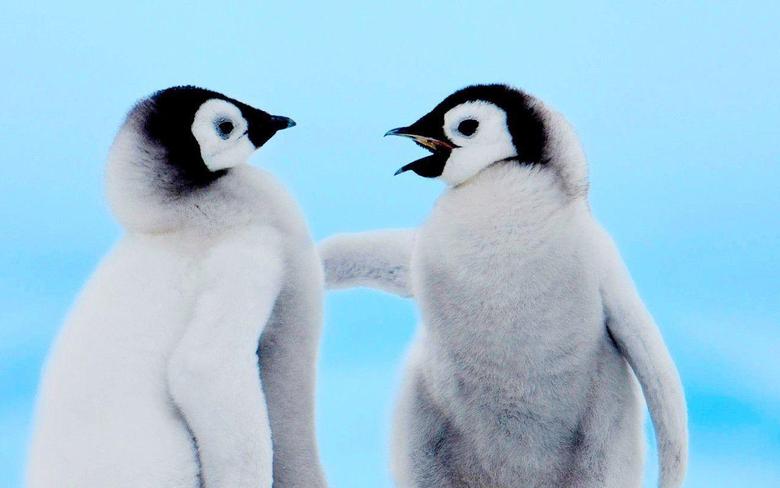 Cute Penguin Wallpapers for Desktop