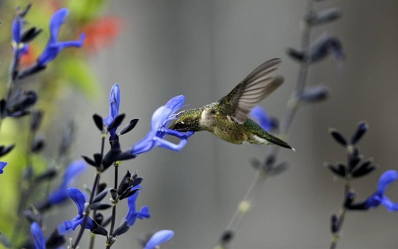 x900 Hummingbird flower Wallpapers