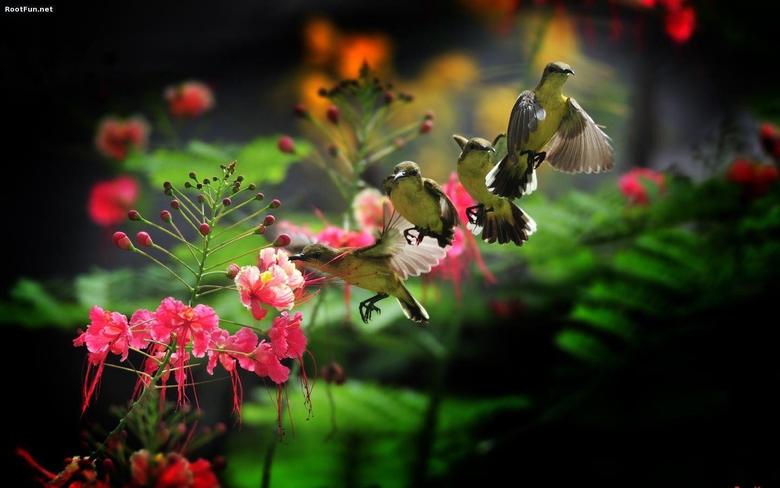 Hummingbird Wallpapers
