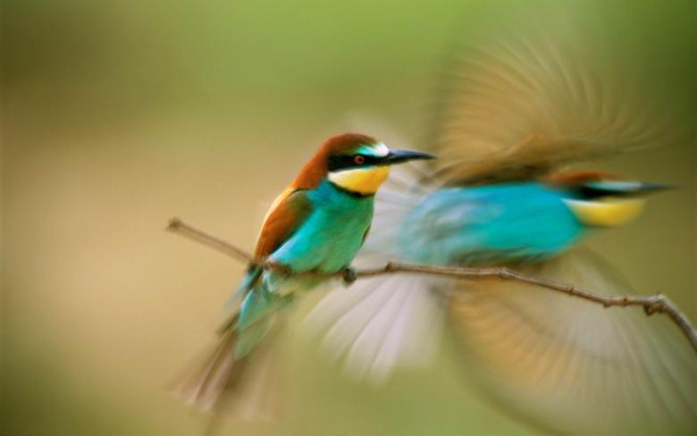 Wallpapers For Hummingbird Wallpapers Widescreen