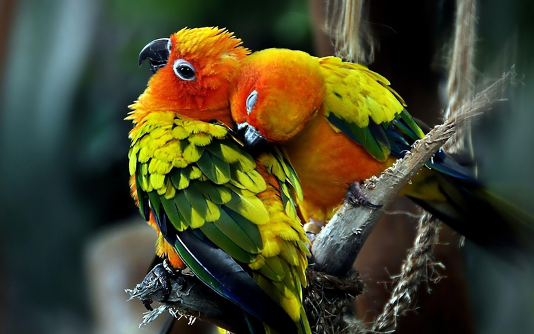Wallpapers For Beautiful Love Birds Wallpapers