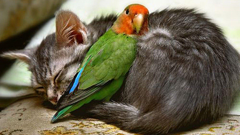 Wallpapers For Hd Love Birds Wallpapers 1080p