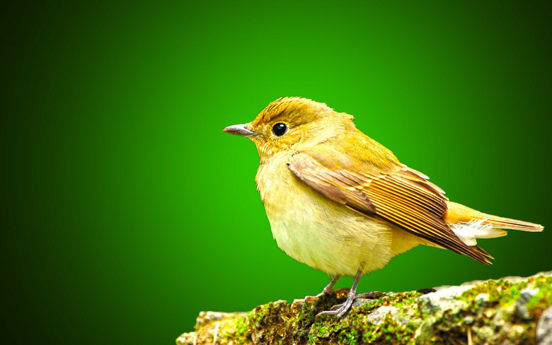 Little Sparrow Wallpapers