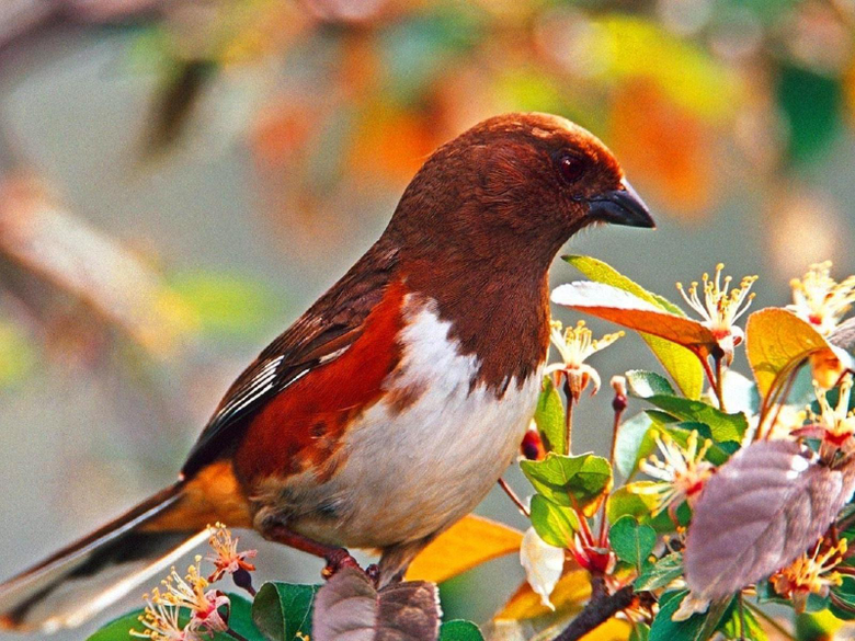 Sparrow Wallpapers 26