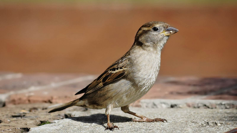 Top Rated HD Sparrow Image