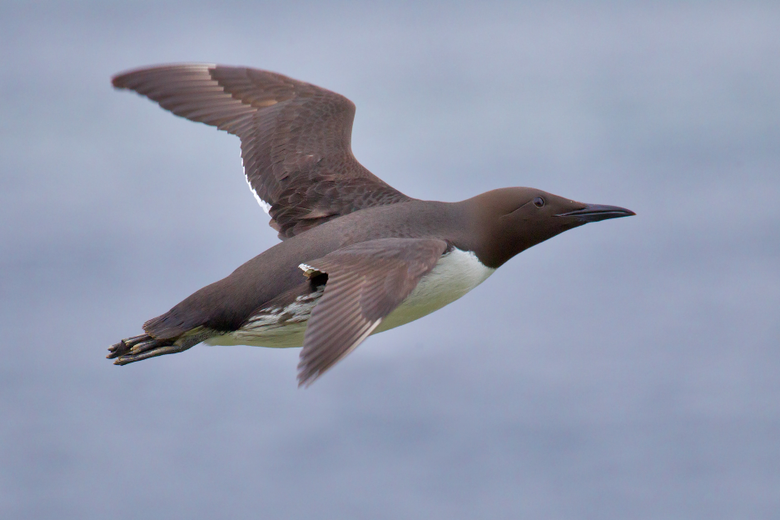 Seabirds Learn All About Em Part 4