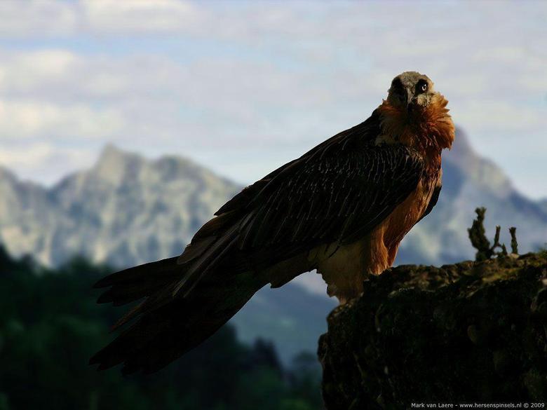 Wallpaper Vulture
