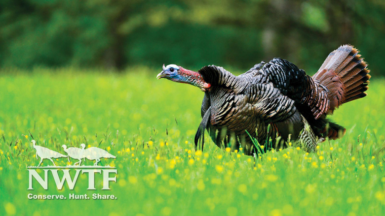 NWTF Wallpapers 1