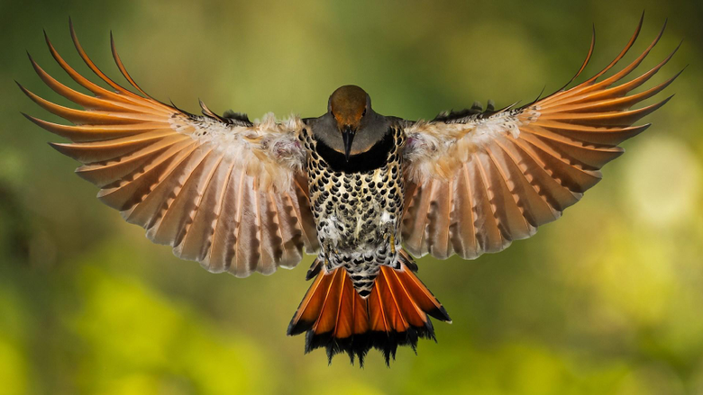 screensaver wallpapers for woodpecker