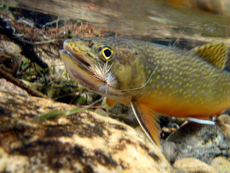 Trout Fishing Wallpapers Wallpapers 1024×768 Fishing Wallpapers