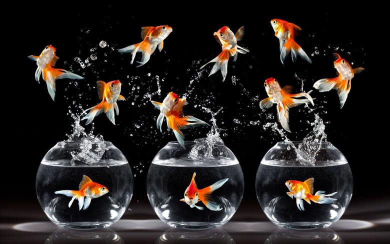 Top 28 Most Beautiful Desktop Wallpapers of Goldfish