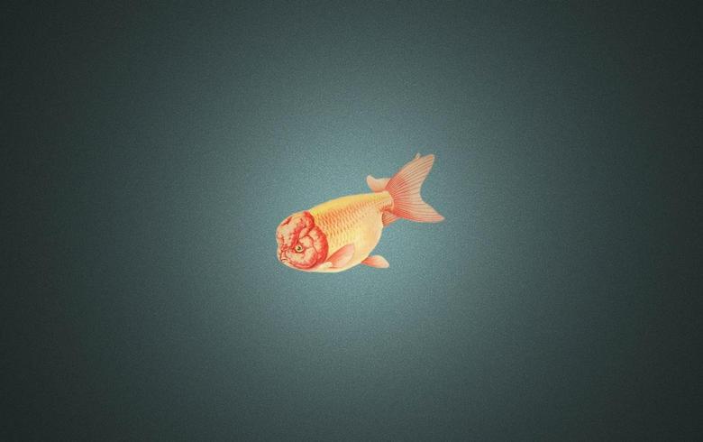 Ranchu Goldfish wallpapers