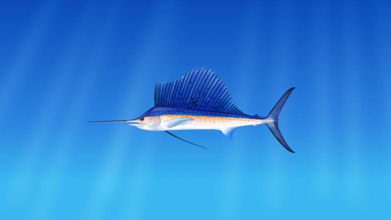 2560x1440 Swordfish Underwater Wallpapers for iMac