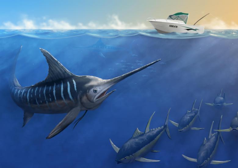 Image Fish Underwater world Swordfish Pictorial art 9921x7015