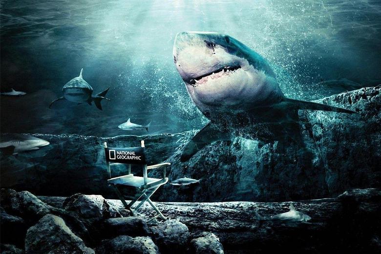 Animal Shark Wallpapers 1280x853