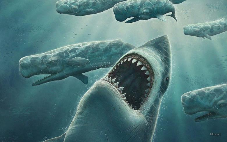 Shark Computer Wallpapers Desktop Backgrounds 1440x900 Id 81300