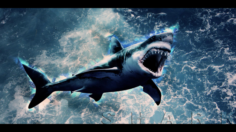 Shark Wallpapers HD by Tooyp