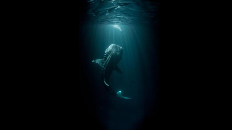 HD Hunting Shark Wallpapers