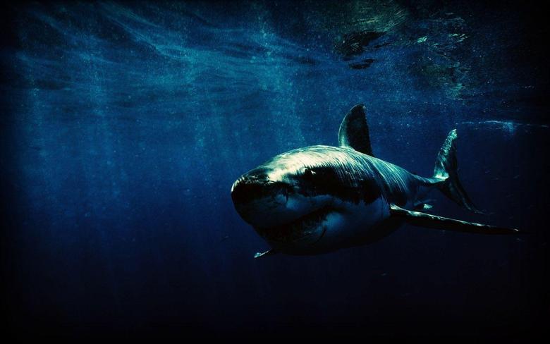 Shark Wallpapers 1023 1440x900 px