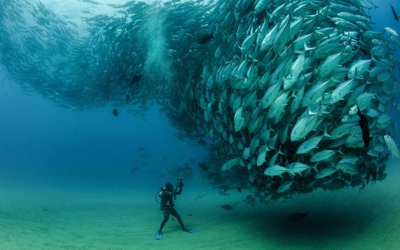 Sardines fish underwater diver Cabo Pulmo National Park