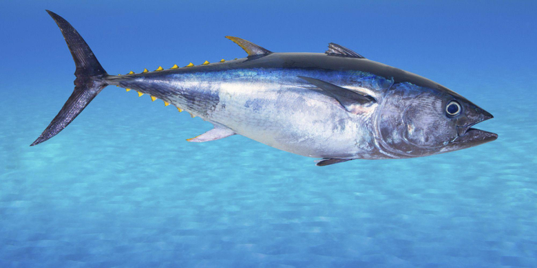 x1000px Pictures of Tuna HD 100