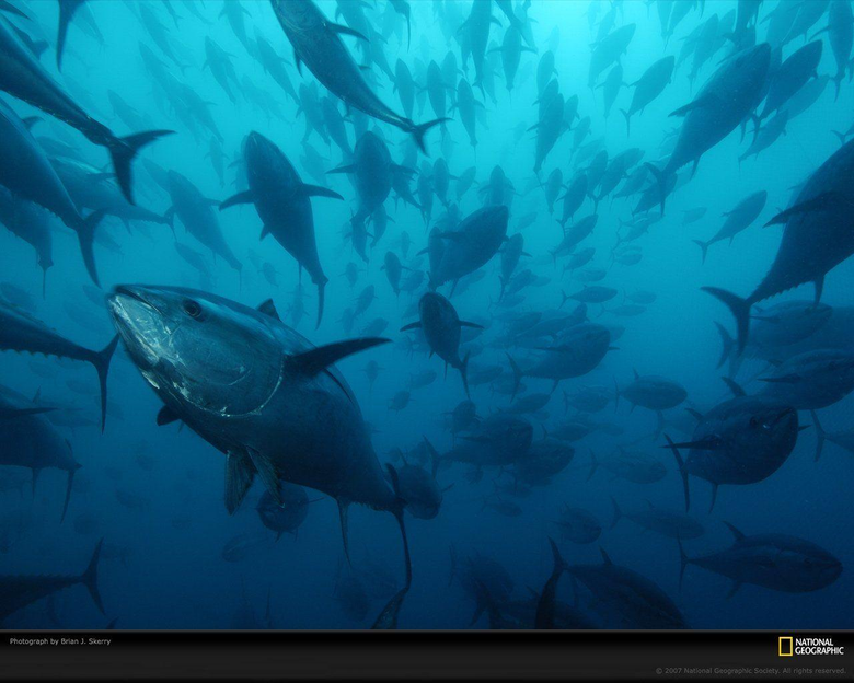 Tuna HD Wallpapers