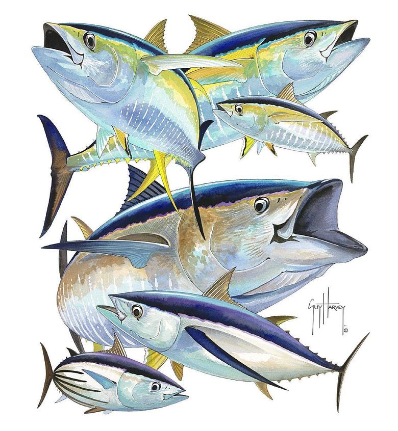 Blackfin Tuna Full Screen High Resolution Wallpaper Photos