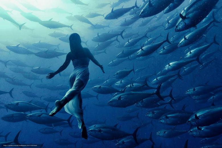 wallpapers girl FISH tuna underwater desktop