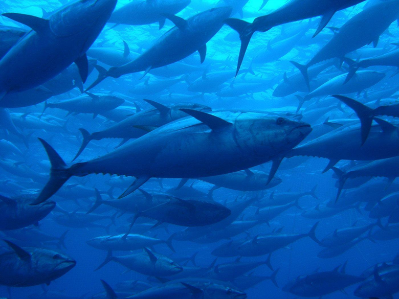 Tuna High Resolution Wallpaper Pictures Full Amazing
