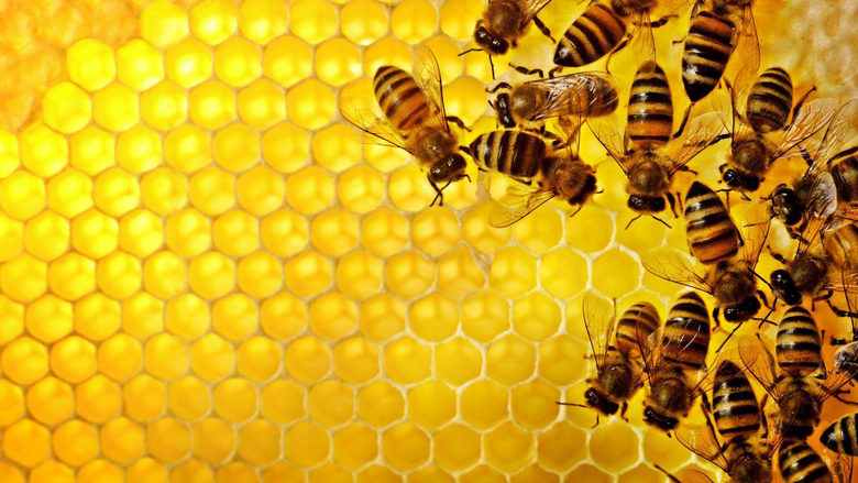 Bee Wallpapers HD Pictures One HD Wallpapers Pictures Backgrounds