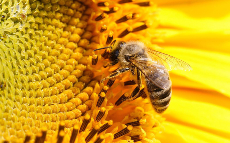Latest Bee HD Wallpapers Image And Photos