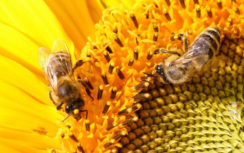 Bee Wallpapers 19