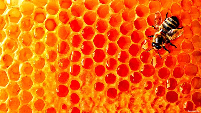 Bee Wallpapers 12