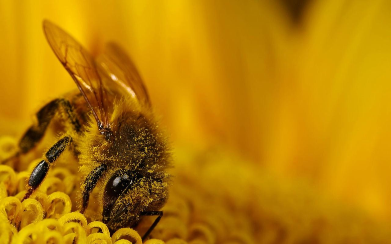 Bee Wallpapers 144 31 Kb