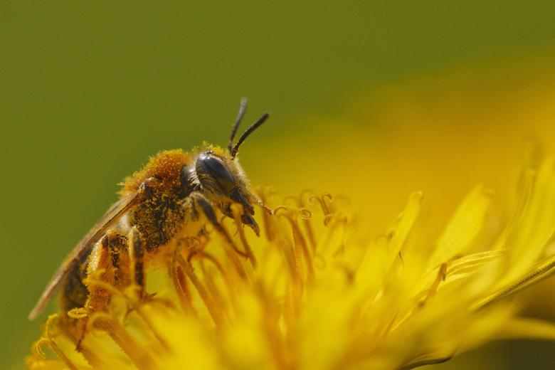honey bee hd wallpapers
