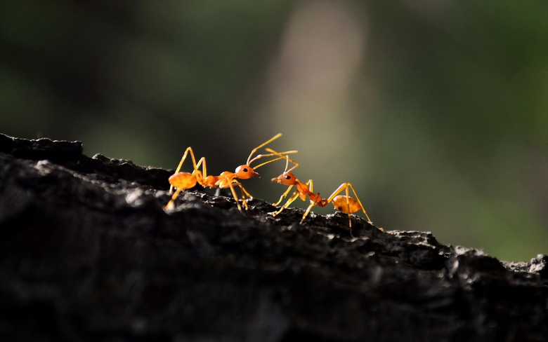 Ant Macro HD Photography 4k Wallpapers Image Backgrounds