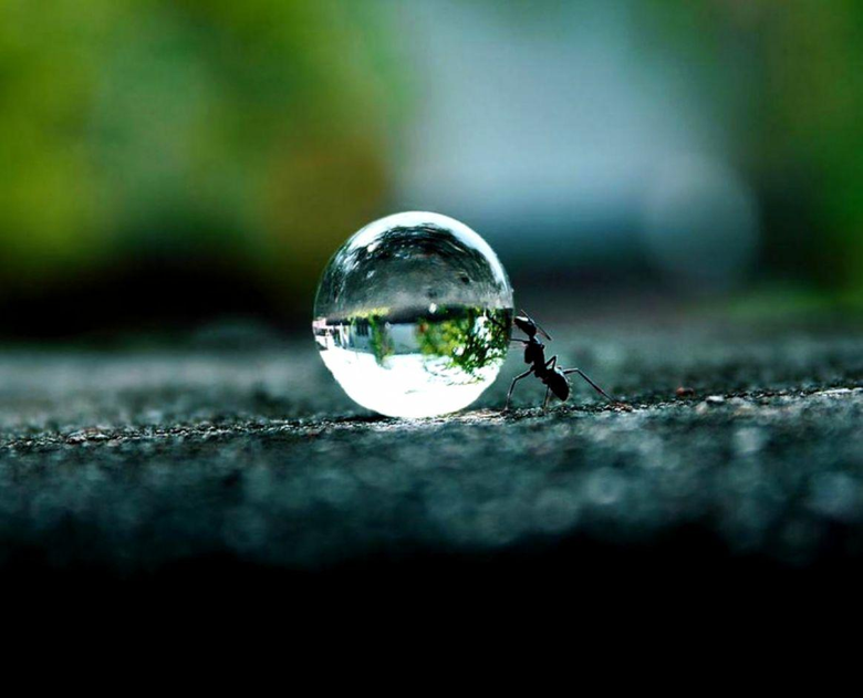Ant Wallpapers