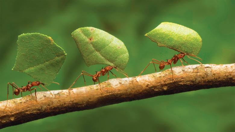Ant Wallpapers Desktop 2625x1688 px
