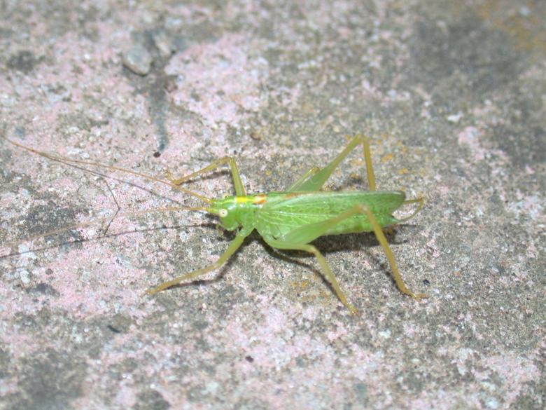 Bush crickets A Dartmoor blog