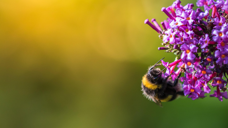 Selective focus photography of bumblebee on flower HD