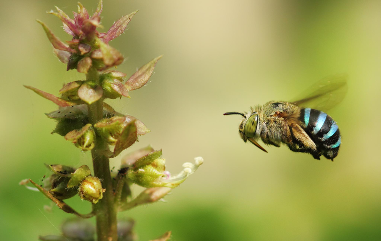 Bumblebee HD Wallpapers