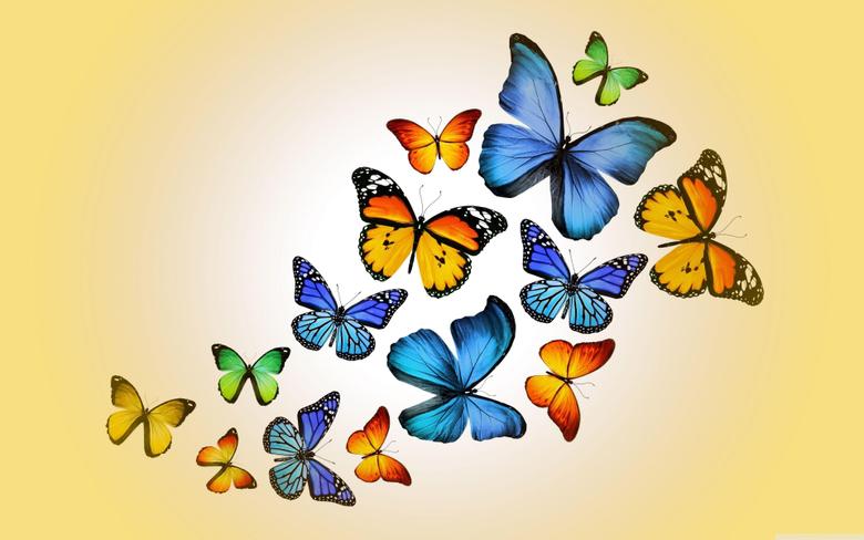 Butterflies 4K HD Desktop Wallpapers for 4K Ultra HD TV Wide