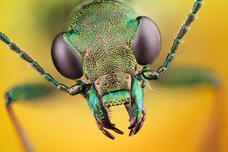 Insect HD Wallpapers