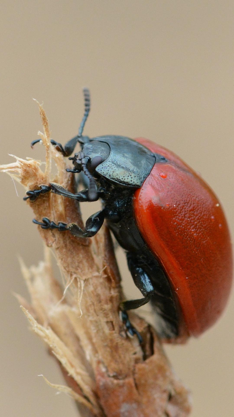wallpapers 1080x1920 beetle insect armor branch